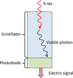 Solid state detector