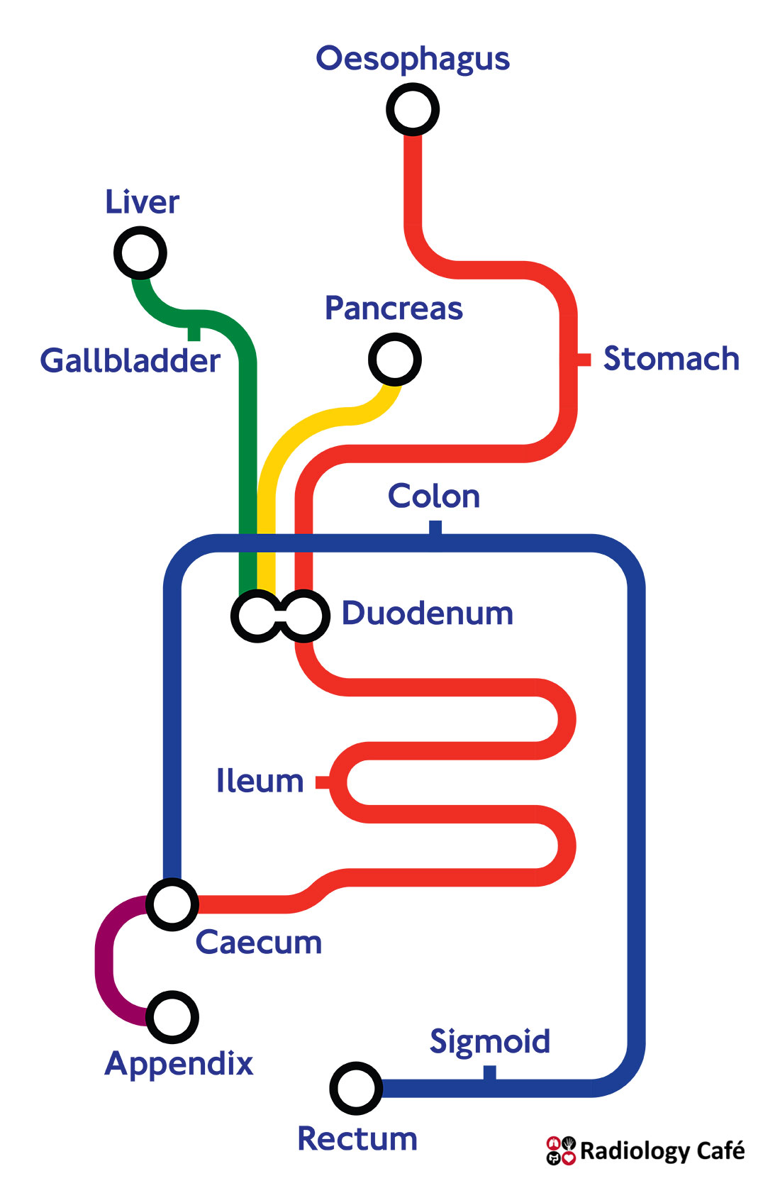 London Tube map of the digestive system